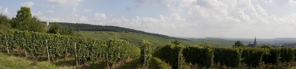 Beste Lage im Rheingau
